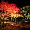 11月4日(金) 松島古地図さんぽと松島紅葉ライトアップ・円通院庭園